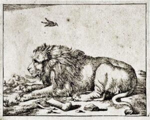 Lion-sketch-by-Marcus-De-Bye-Marcus-Dutch-artist